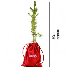 Custom Branded Sapling Christmas Tree for corporate gifts
