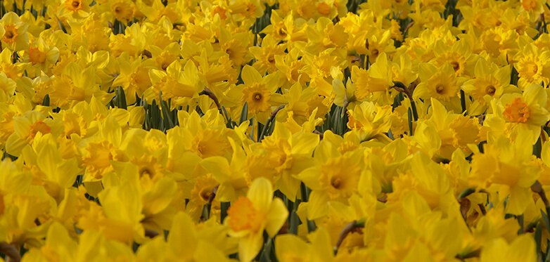 Great Promotional Items For Celebrating in a St David's Day Event